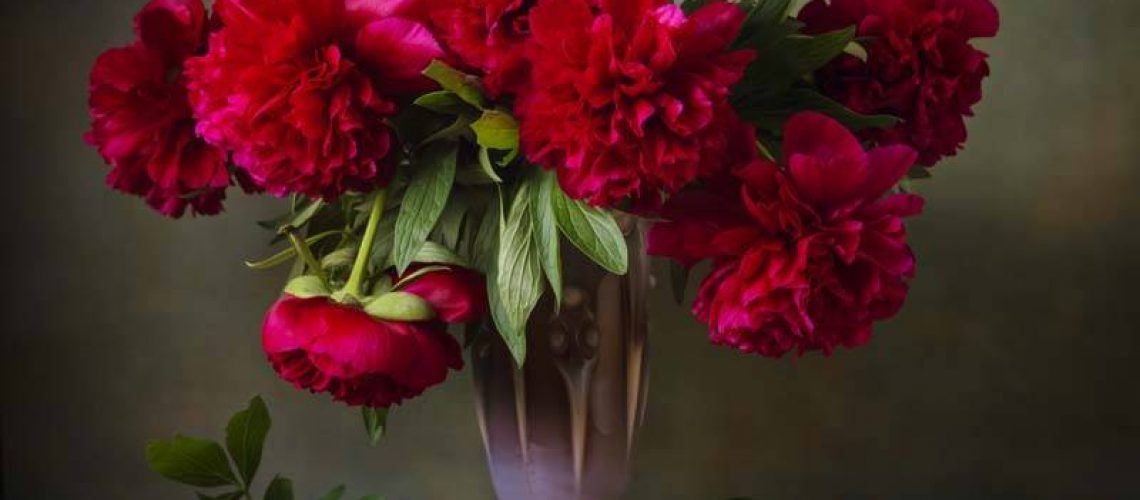 Still life with burgundy peonies in a vase