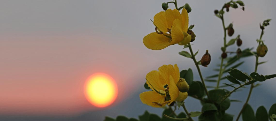 Sunset & Yellow Flower