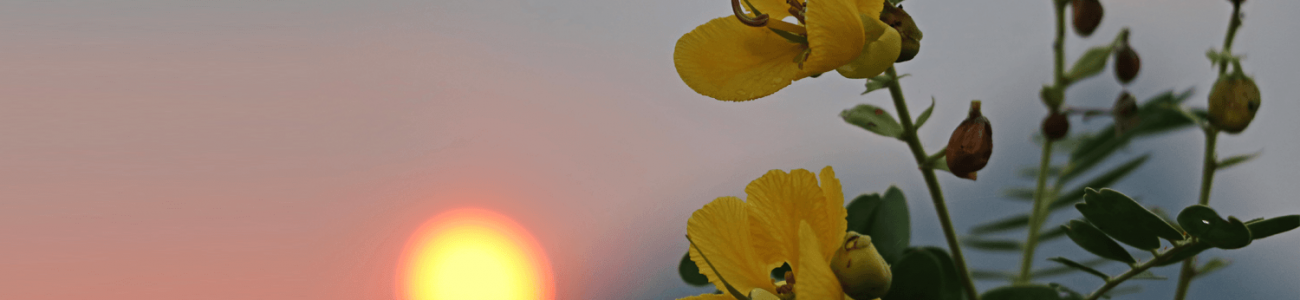 Sunset & Yellow Flower